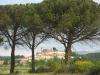 Monterchi through the umbrella pines