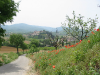 Springtime in Monterchi