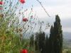 Walk to Monterchi from Lippiano